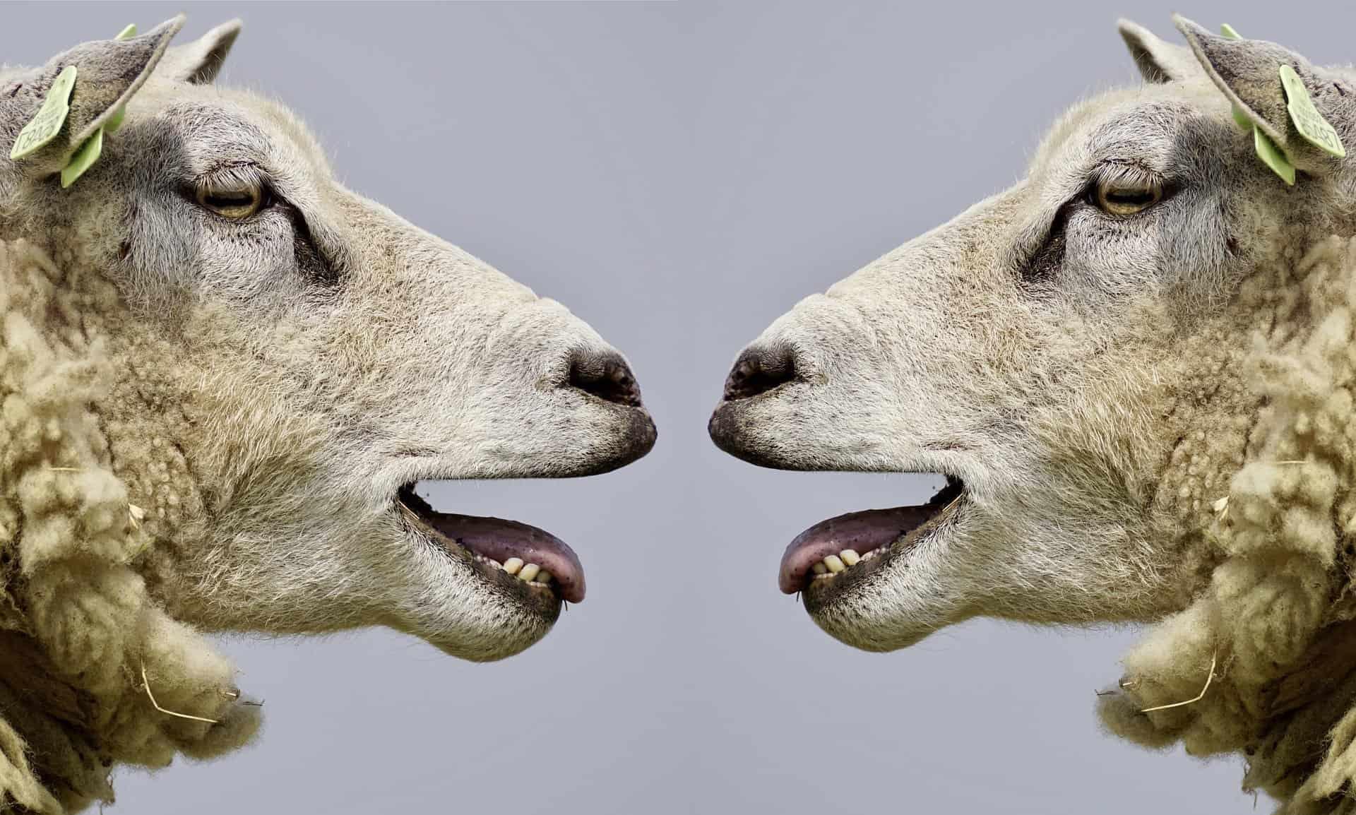 https://laroueetlaplume.fr/wp-content/uploads/2020/01/moutons.jpg