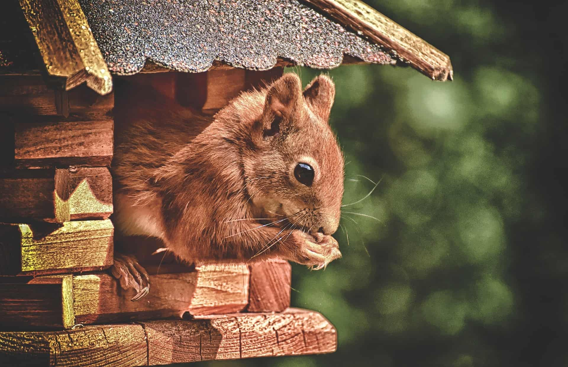 https://laroueetlaplume.fr/wp-content/uploads/2020/01/squirrel-food.jpg